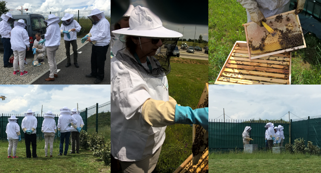 Crozuet Valence beehives