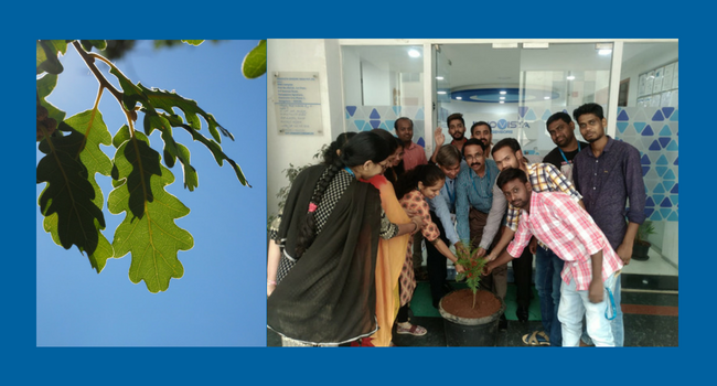 Environment Day for Crouzet India